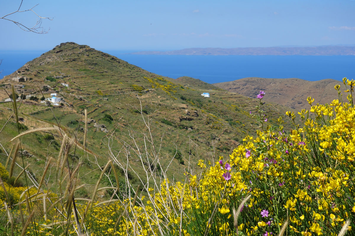 Landcape in Serifos with yellow and purple wild flowers